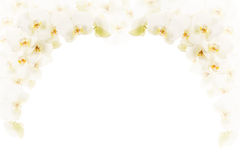 White orchids frame. White orchid flowers as a frame with room for text on white background Stock Photos