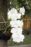 White orchids. Stock Photography