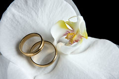 White orchids golden rings Royalty Free Stock Photography