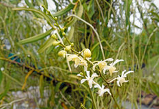 White orchids on green Stock Photos