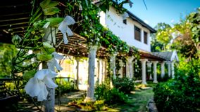 White orchids hanging down in front of an old villa royalty free stock photo