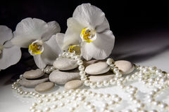 White orchids and pearls Royalty Free Stock Photography