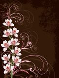 White orchids with pink swirls royalty free illustration