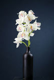 White orchids, still life. White orchids in the ceramic bottle, still life Stock Images