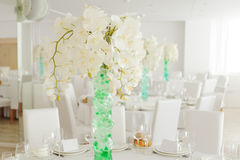 White Orchids in Vase Stock Photo