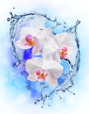 White orchids on the water splash Royalty Free Stock Photo