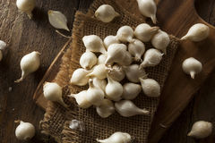 White Organic Pearl Onions Royalty Free Stock Images