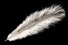 White ostrich feather Royalty Free Stock Photos
