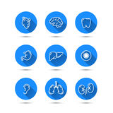 White outline icons of humans organs on blue background with long shadow Royalty Free Stock Photo