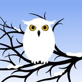 White Owl. Owl sitting on a tree branch. Vector illustration royalty free illustration