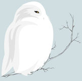 White owl Stock Photo