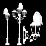 White owl sitting on a streetlight vector set Royalty Free Stock Photos