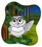White owl Royalty Free Stock Photo