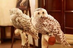 White Owl Royalty Free Stock Photography