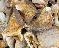 White Oyster Mushrooms Close View Royalty Free Stock Photo