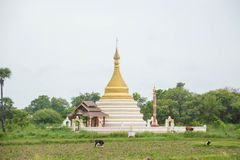 White Pagoda on rice field at Inwa ancient city. Myanmar Royalty Free Stock Images