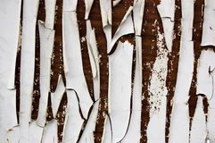 White paint flakes on a brown wood. Backgound Stock Image