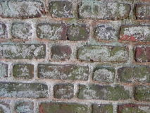 White paint flecked on brick wall. Brick wall,distressed brick,textured brick, old brick, mottled brick,brown brick,background, textured detail, red brick,moss Royalty Free Stock Image