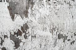 White Paint Grunge Stock Photo