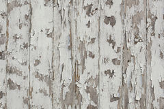 White paint peeling off grunge wood wall Royalty Free Stock Image