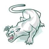 White panther Stock Image