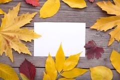 White paper with autumn leaves on grey table stock image
