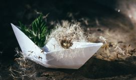 White paper boat and fluffy dandelion. Childhood dreams. Romantic dreams and fantasies. White paper boat on the background of clear transparent water and stock images