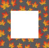 White paper card on autumn backround even maple leaves. White paper card on autumn backround maple leaves. Vector illustration Royalty Free Stock Photos