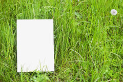 White paper card in green grass Stock Image