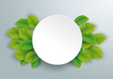White Paper Circle Green Beech Leaves. Infographic design with circle and green eco leaves on the gray background Royalty Free Stock Photos