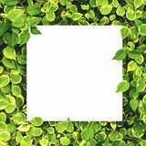 White paper on green leaf background with center free space for montage text or product. Royalty Free Stock Photos