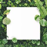 White paper on green leaf background with center free space for montage text or product. Royalty Free Stock Images
