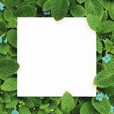 White paper on green leaf background with center free space for montage text or product. Royalty Free Stock Image