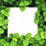 White paper on green leaf background with center free space for montage text or product. Stock Image