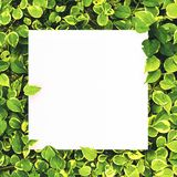 White paper on green leaf background with center free space for montage text or product. Stock Photo