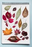 White paper Notebook with various colorful dried autumn leaves.Herbarium folder with fall leaves Royalty Free Stock Image