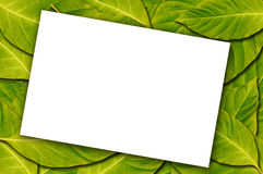 White Paper On Leaf Background Stock Images