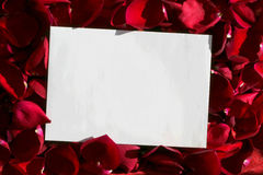 White paper over red petals Royalty Free Stock Photos