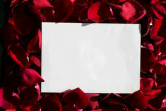 White paper over red roses Royalty Free Stock Photos