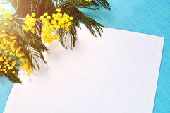 White paper sheet with copy space near bright yellow fluffy mimosa flowers lit by sunlight on the turquoise linen tablecloth. Royalty Free Stock Photos