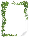 White paper sheet decorated ivy Stock Image