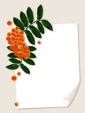 White paper sheet with rowan berries branch. Royalty Free Stock Images