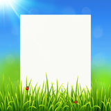 White paper sheet on sunny summer grass background Royalty Free Stock Photo
