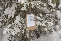 White paper shooting mark with bullet holes on piece of plywood in wild forest. Winter. Snow. Dull weather. Royalty Free Stock Image