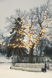 White park bench under illuminated tree in winter Stock Photo