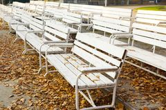 White park benches. Many white wooden benches at a park Royalty Free Stock Image