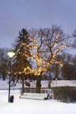 White park seat under illuminated tree in winter stock image