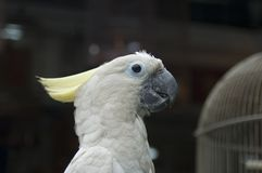 White Parrot 4. White Parrot with Cage Royalty Free Stock Photography
