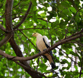 White parrot bird Stock Image