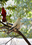 White parrot bird Stock Image